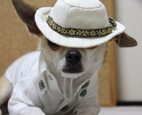 Собаки модели работа работа с моделями в блендере