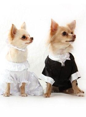 Работа для собаки модель американская девушка модель менеджмента курсовая работа